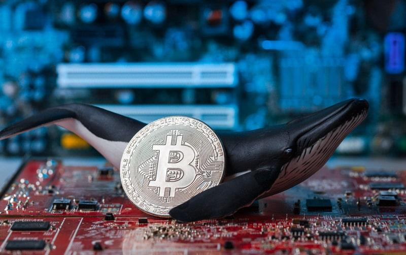 نهنگهای بیت کوین چه کسانی هستند و چگونه معامله میکنند؟ | همتاپی