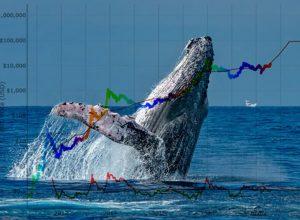 آیا واریزی نهنگها به صرافیها میتواند عاملی برای پیش بینی قیمت بیت کوین باشد؟ | همتاپی