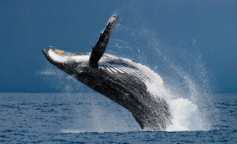 نهنگهای بیت کوین، 50 هزار بیت کوین فروختند   همتاپی