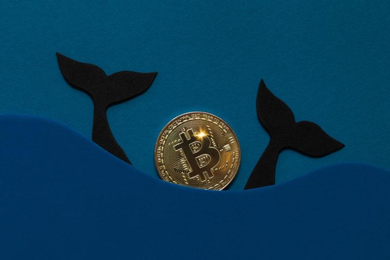 افزایش خرید بیت کوین توسط نهنگها با ورود 254 نهنگ جدید به بازار ارزهای دیجیتال   همتاپی